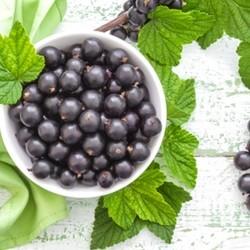 TFA Black Currant Flavor (Grosella oscura)