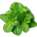 TFA Spearmint Flavor