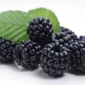TFA Blackberry Flavor (mora)