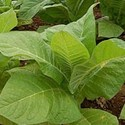 TFA DK Tobacco Base Flavor